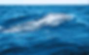 スクリーンショット 2020-05-14 16.07.47.png