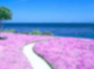 スクリーンショット 2020-05-13 6.10.53.png