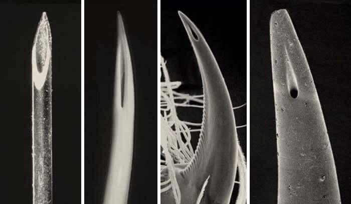 punta de una aguja hipodérmica, la segunda el aguijón de una víbora, la tercera es el agui
