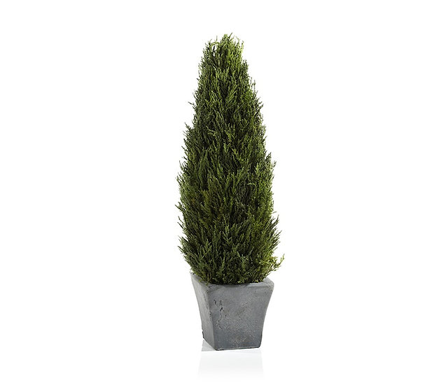PRESERVED CYPRESS TREE TOPIARY - LARGE