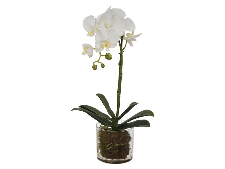 WHITE PHALAENOPSIS IN GLASS, 18'' FAUX