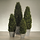 Thumbnail: PRESERVED CYPRESS TREE TOPIARY - LARGE