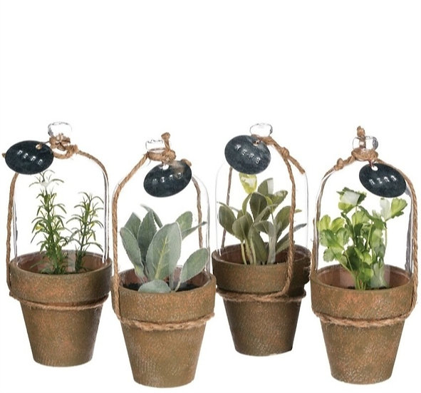 HERB IN CLOCHE POTTED PLANTS, SET OF 4