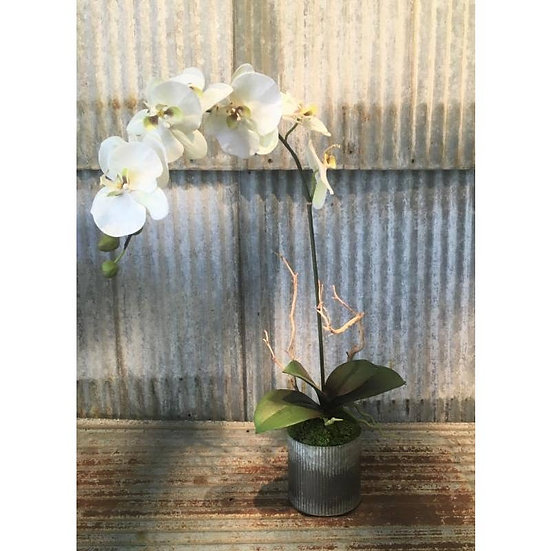 WHITE ORCHID IN CORRUGATED TIN, 23'' FAUX