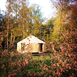Germany - blueberry yurt