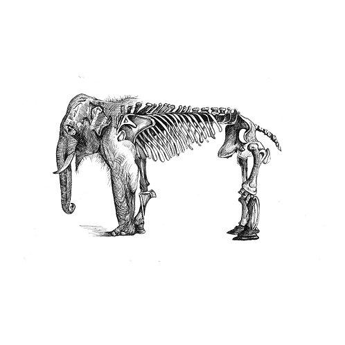 "Print ""Elefante"" - Vero Villarreal Sada"