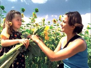 261620650-sunflower-field-picking-plucki