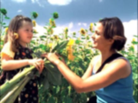 261620650-sunflower-field-picking-plucki