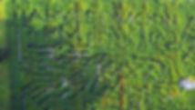 corn maze florida