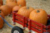 pumpkins-in-a-wagon1.jpg