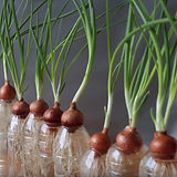 grow-onion.jpg