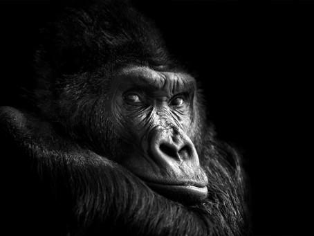 Taming the 800 Pound Gorilla