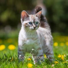 khloe_lola_Feb-20-2021_MandysBengals-23.