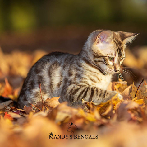 Dahlia_Aug21_outdoor_Shoot_MandysBengals