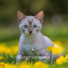 khloe_lola_Feb-20-2021_MandysBengals-13.