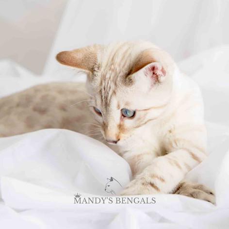 Sephora_Leo_Nov-7-21_MandysBengals-110.j