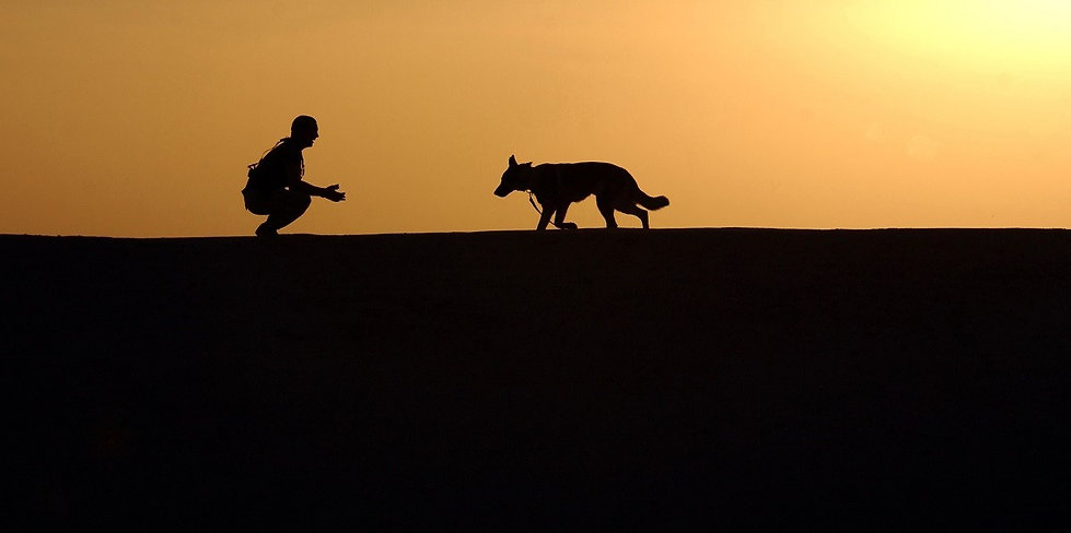 dog sunset.jpg