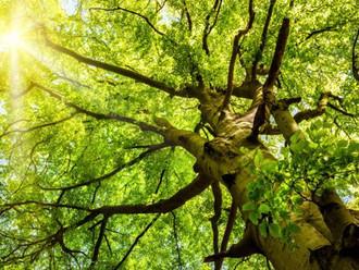 5 Motivos para plantar uma árvore
