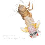 periodical cicada molting