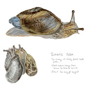 snail sketchbook page