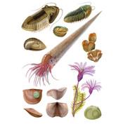 ordovician invertebrates.  Field Museum fossil invertebrates collection, 2019.
