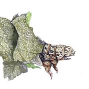 bagworm caterpillar