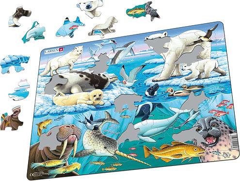 Larsen puzzle Arktické zvieratá