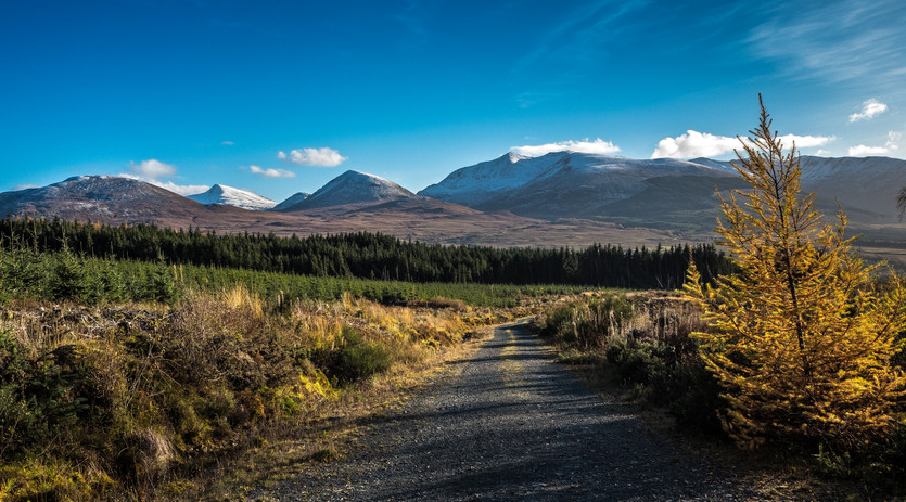 View from the forest track behind Upper Inverroy