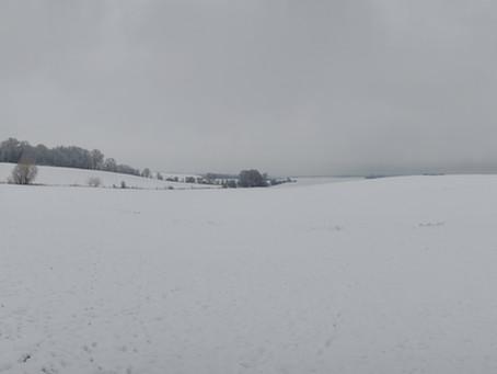 Osice a sníh