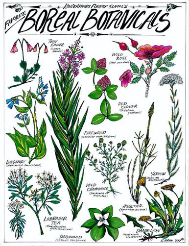 Kinderwoods Forest Schools Favorite Boreal Botanicals
