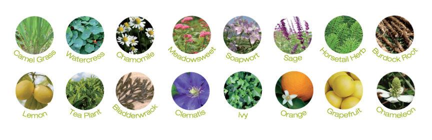 שישה עשר תמציות פרחים בבייבי פוט