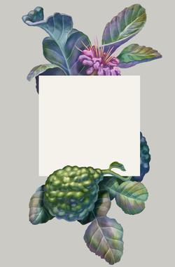 Exotic Bergamot