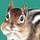 Thumbnail: Chipmunk Greeting Card