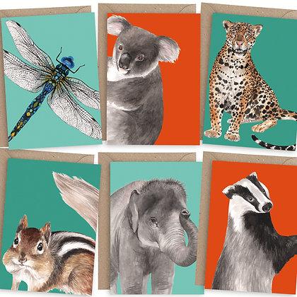 6 Pack Animal Greetings Cards
