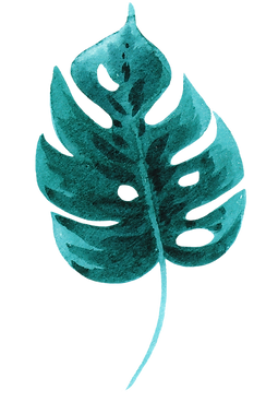 Tropical Leaf three.png