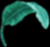 Tropical Leaf six.png