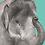 Thumbnail: Elephant Greeting Card