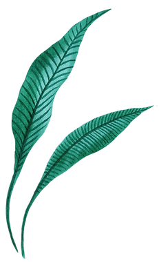 Tropical Leaf five.png