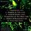 Thumbnail: CD ALAMEDA SOLIDÃO - MUSHROOM PROJECT