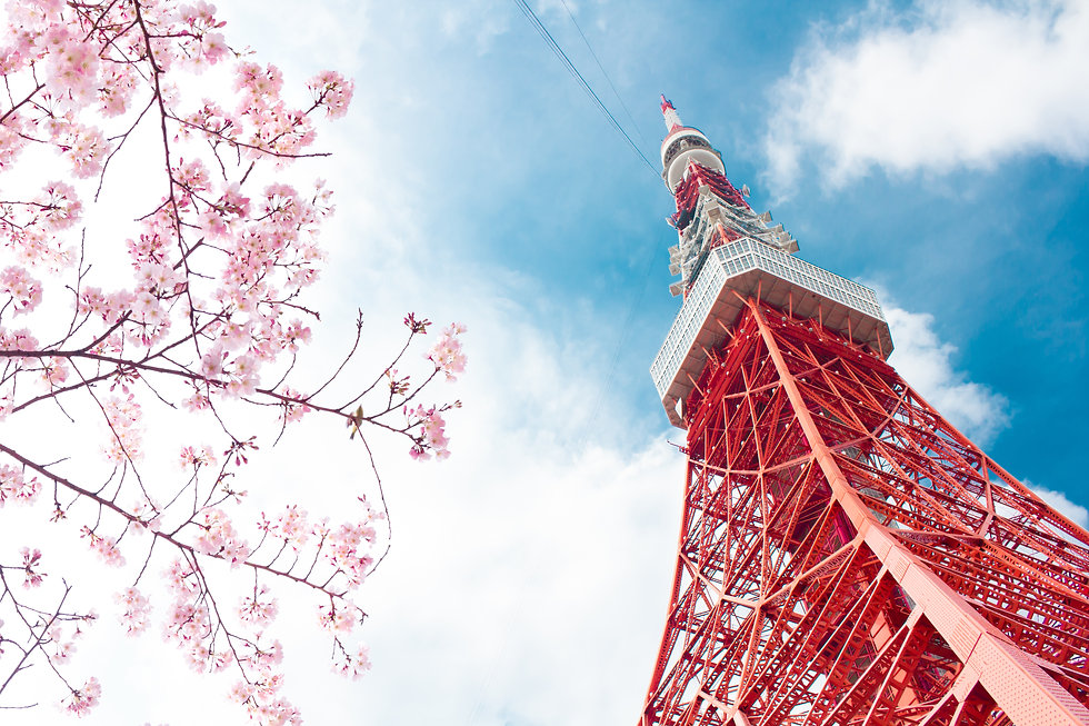 View of Tokyo tower and pink cherry blossom(sakura) with blue sky during winter season of