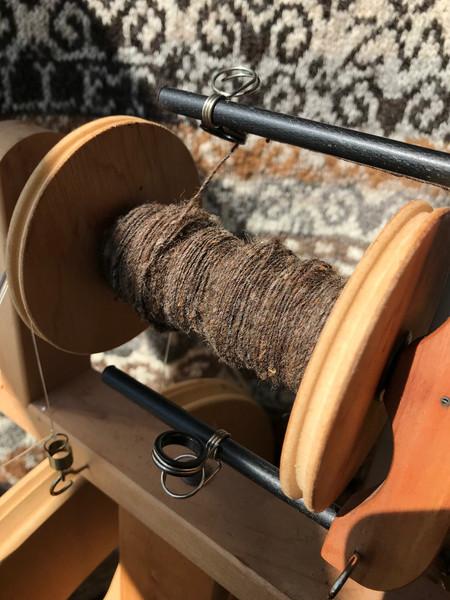 spinnning the moorit (brown) fleece