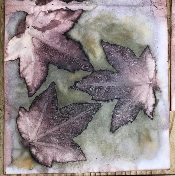 Liquidambar leaves on paper