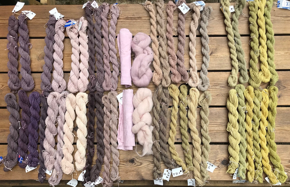 Yarn,fabric and fibre dyed in successive batches in the same Sticta dyebath, starting at the left