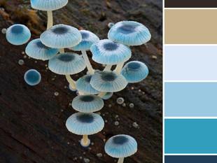 Pigment Palette: Fungi