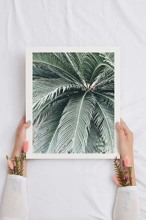 Miami Palm