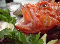 Pesce Bocca.jpg