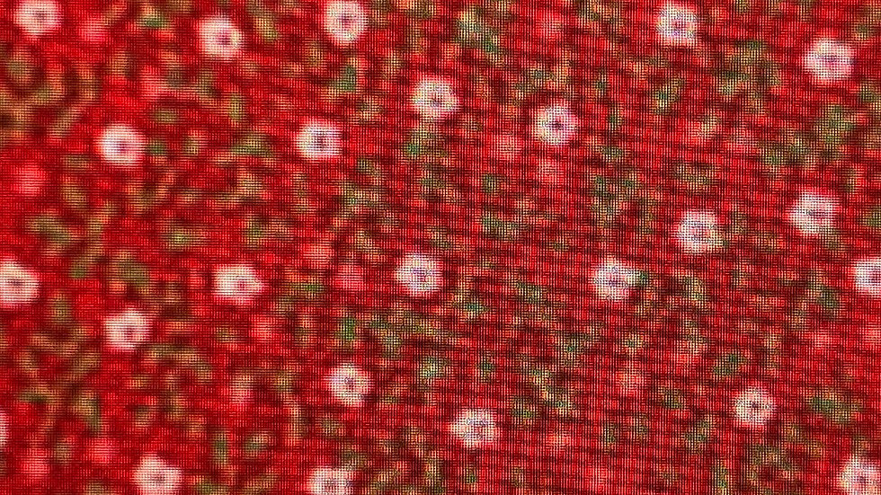Robert Kaufman (Red) fromSevenberry:Petites Fleurs SB-6100D42-7