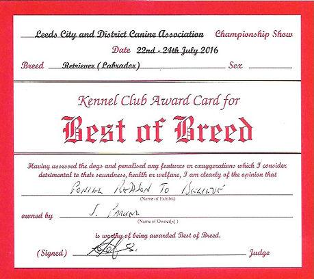Best of Breed | Bruadarach | Labradors | Brodie