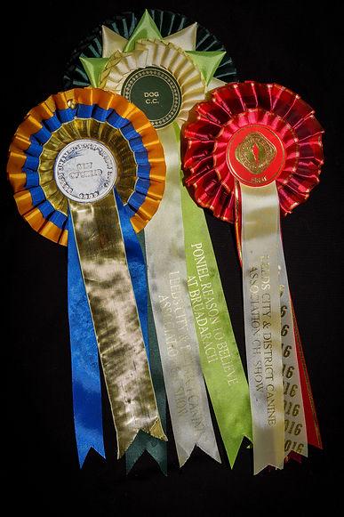 Bruadarach | labradors | Challenge Certs | Rosettes | Brodie.