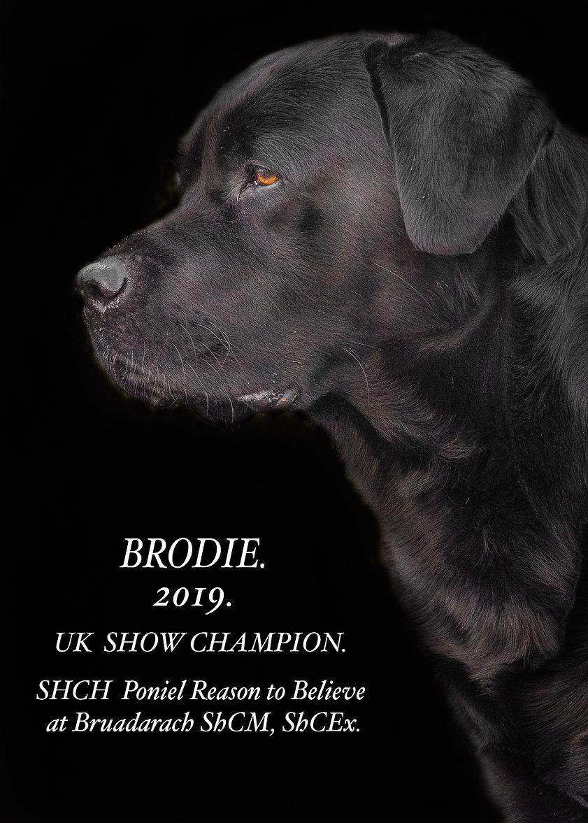 Brodie the star.jpg
